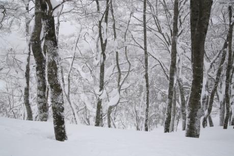雪のブナ林2