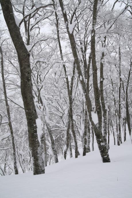 冬の森(毛無山)01