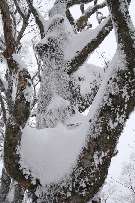 冬の森(毛無山)02