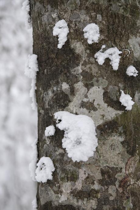 冬の森(毛無山)03
