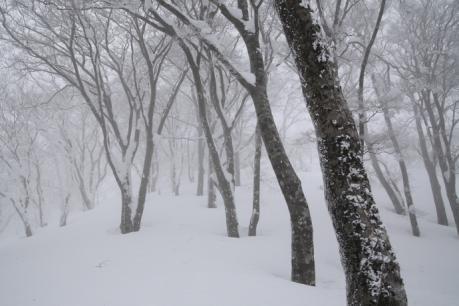 冬の森(毛無山)04