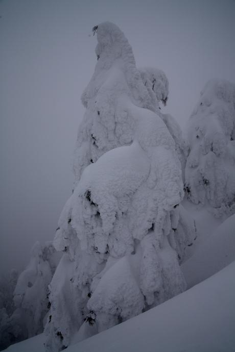 冬の森(毛無山)07