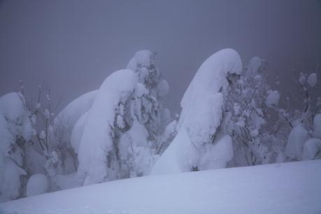 冬の森(毛無山)08