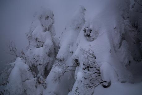 冬の森(毛無山)09