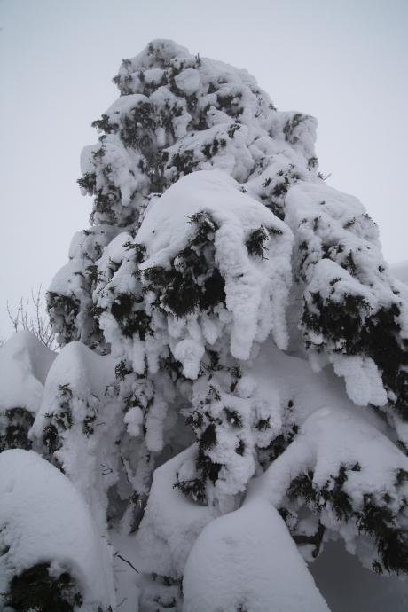 冬の森(毛無山)06