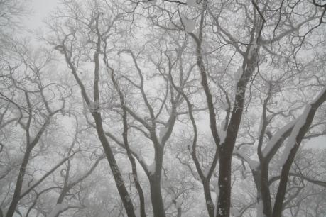 冬の森(毛無山)12