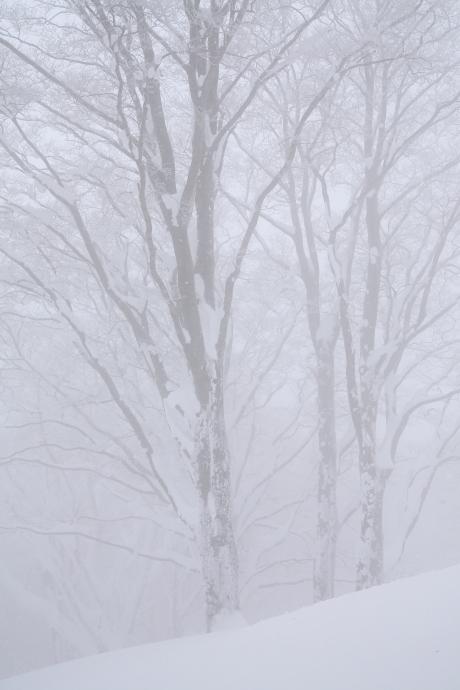 冬の森(毛無山)13