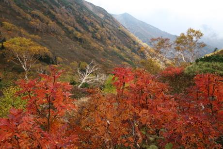 黒部源流から下流方面の紅葉