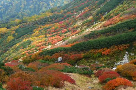 丸山カールの紅葉