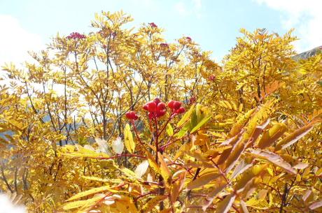 黒部源流の黄葉