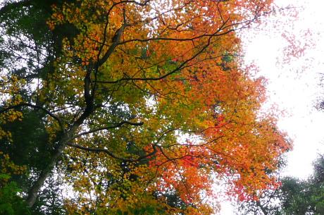 登山道上の紅葉