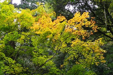 登山道上の黄葉