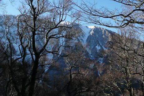 ブナ林背後の大山北壁