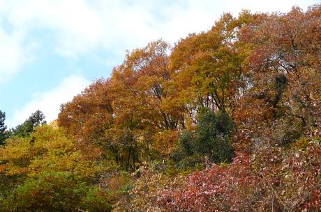 登山口の紅葉