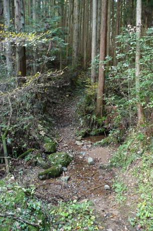 人工林に向かう登山道