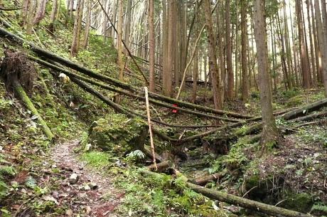 倒木ある登山道
