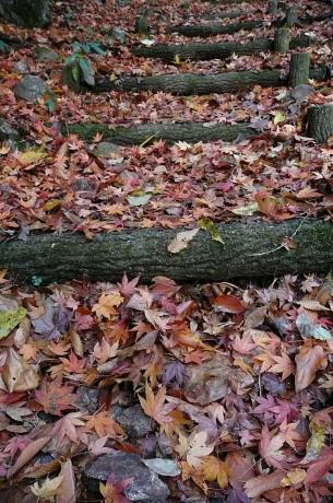 落ち葉の積もる階段