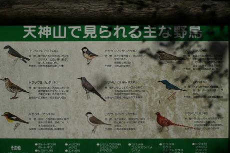 野鳥の解説板