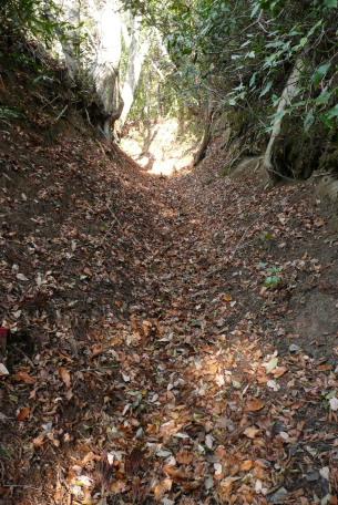 林道から上の谷底のような道