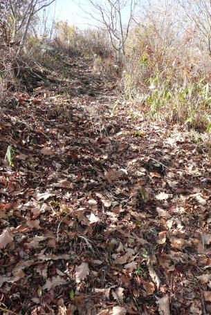 カシワの葉が落ちた登山道