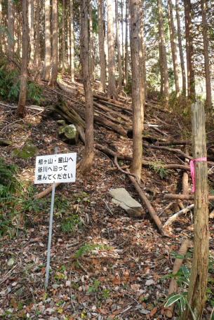 人工林前の看板