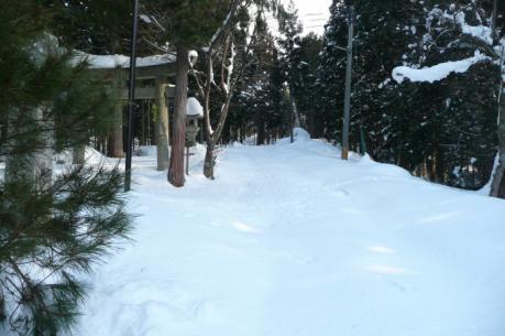 新雪の林道