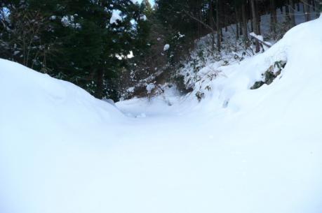 狭くなった林道