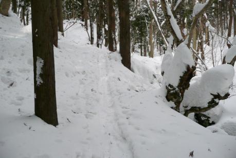 杉林の中の道