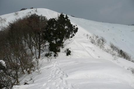 木を避けて雪庇を越える