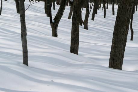 ストライプの森