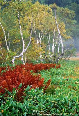 秋の尾瀬02