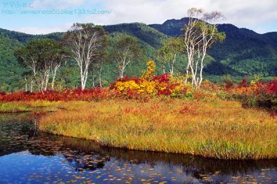 秋の尾瀬08