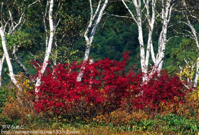 秋の尾瀬10