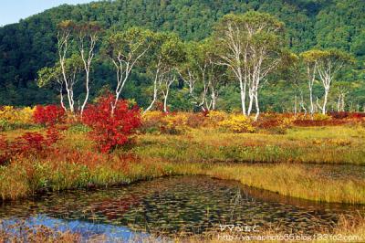 秋の尾瀬11
