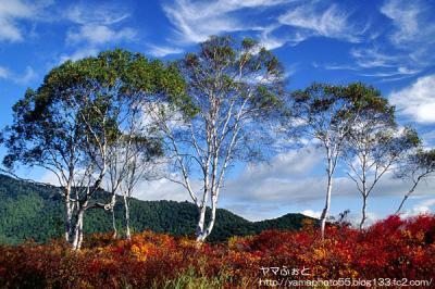秋の尾瀬12