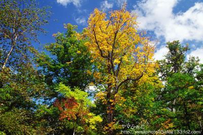秋の尾瀬13
