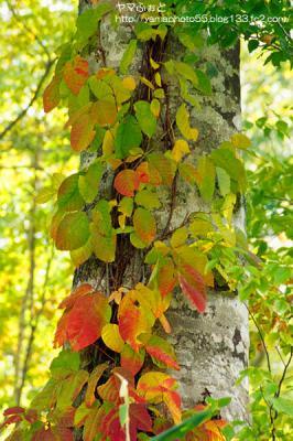 秋の尾瀬14
