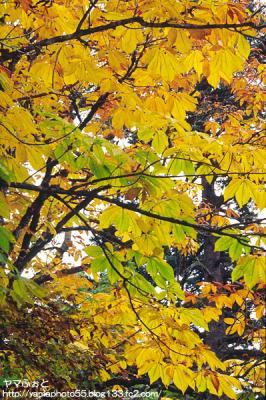 秋の尾瀬16