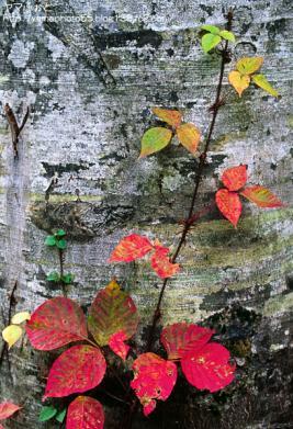 秋の尾瀬17