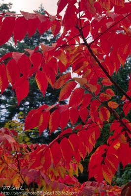 秋の尾瀬20