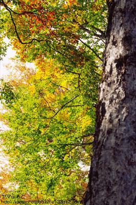 秋の尾瀬22