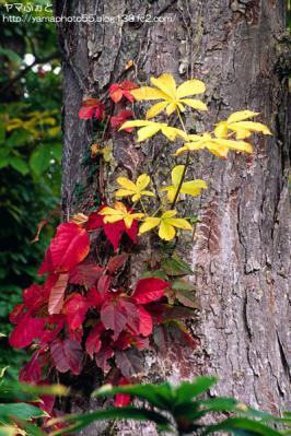 秋の尾瀬23