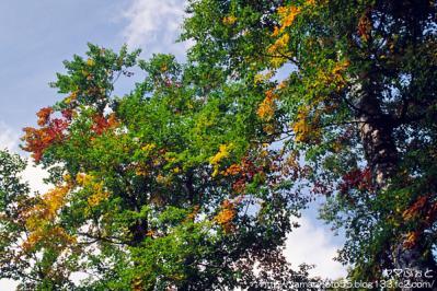 秋の尾瀬24