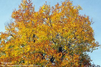 秋の尾瀬25