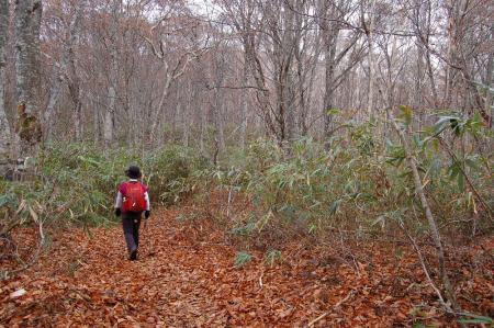 2根曲がり竹の山道10