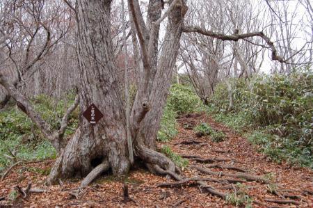 2しなの木13