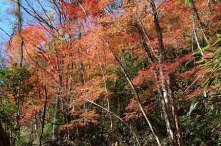 竜神川の紅葉20
