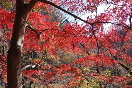 竜神川の紅葉21