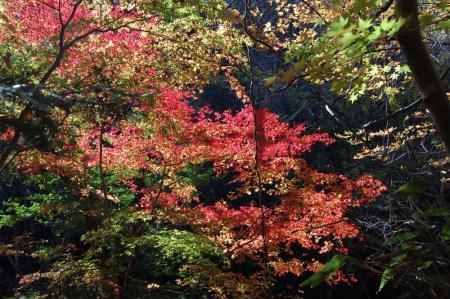 竜神川の紅葉23
