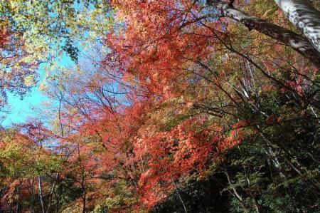 竜神川の紅葉24
